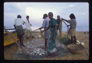 250043089_1999-srilankanegombofish01