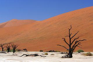 Namibiavlei