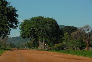 Baobabsmall