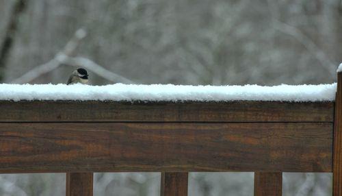 Birdsnow-small