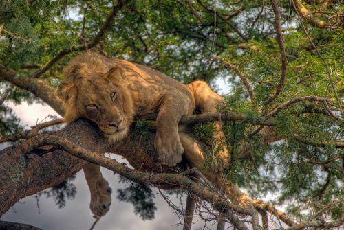 Lionhdr