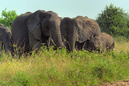 ElephantHDR