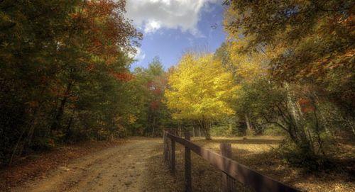 Autumnscene2010