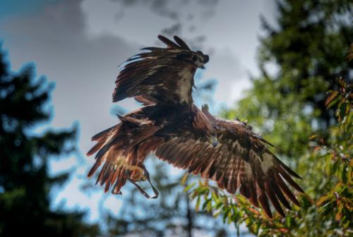 EagleHDR