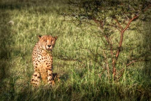 CheetahHDR