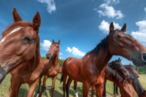 HorsesHDR