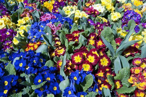 Istanbulflowers